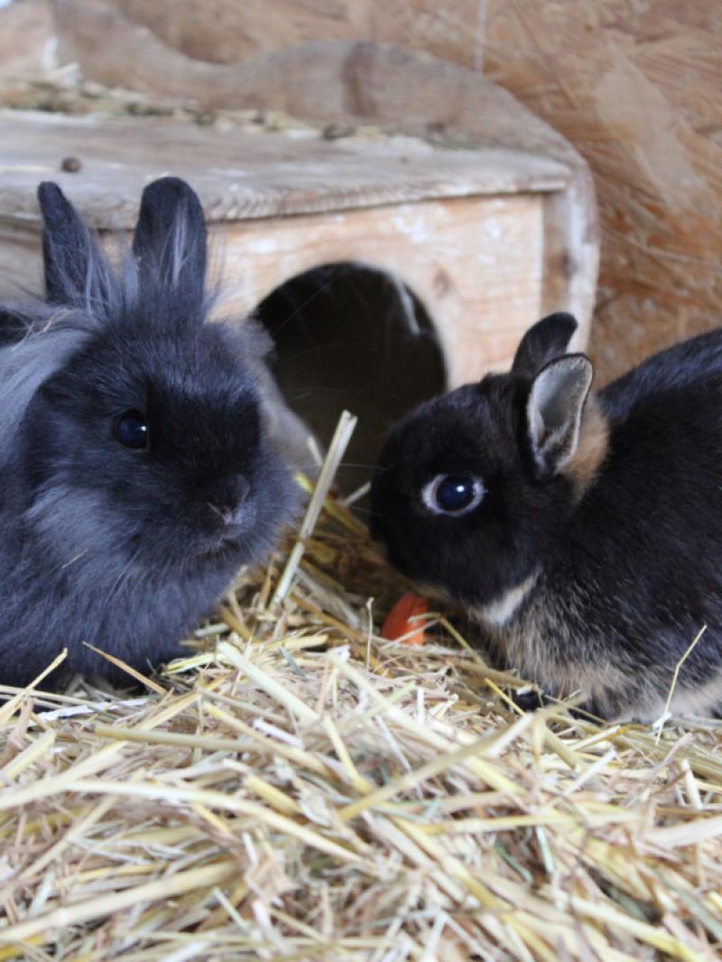 Kennenlernen kaninchen